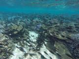 890 Mauritius island - Ile Maurice 2014 - GOPR2691_DxO Pbase.jpg