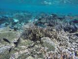 892 Mauritius island - Ile Maurice 2014 - GOPR2693_DxO Pbase.jpg