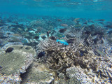 893 Mauritius island - Ile Maurice 2014 - GOPR2694_DxO Pbase.jpg