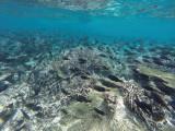 906 Mauritius island - Ile Maurice 2014 - GOPR2708_DxO Pbase.jpg