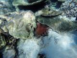 914 Mauritius island - Ile Maurice 2014 - GOPR2727_DxO Pbase.jpg
