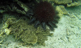 391 Mauritius island - Ile Maurice 2014 - G1262032_DxO Pbase.jpg