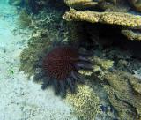 401 Mauritius island - Ile Maurice 2014 - GOPR2043_DxO Pbase.jpg