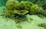 407 Mauritius island - Ile Maurice 2014 - GOPR2049_DxO Pbase.jpg