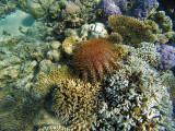 936 Mauritius island - Ile Maurice 2014 - GOPR2753_DxO Pbase.jpg