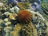 938 Mauritius island - Ile Maurice 2014 - GOPR2755_DxO Pbase.jpg