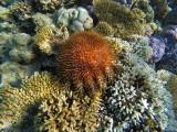 940 Mauritius island - Ile Maurice 2014 - GOPR2757_DxO Pbase.jpg