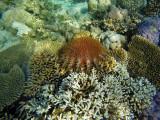 943 Mauritius island - Ile Maurice 2014 - GOPR2760_DxO Pbase.jpg