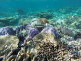 945 Mauritius island - Ile Maurice 2014 - GOPR2764_DxO Pbase.jpg