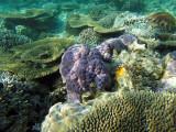 946 Mauritius island - Ile Maurice 2014 - GOPR2765_DxO Pbase.jpg