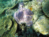 947 Mauritius island - Ile Maurice 2014 - GOPR2766_DxO Pbase.jpg