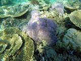 948 Mauritius island - Ile Maurice 2014 - GOPR2767_DxO Pbase.jpg