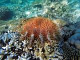 952 Mauritius island - Ile Maurice 2014 - GOPR2771_DxO Pbase.jpg
