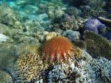 957 Mauritius island - Ile Maurice 2014 - GOPR2776_DxO Pbase.jpg