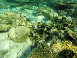 961 Mauritius island - Ile Maurice 2014 - GOPR2780_DxO Pbase.jpg