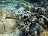 962 Mauritius island - Ile Maurice 2014 - GOPR2781_DxO Pbase.jpg
