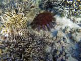 964 Mauritius island - Ile Maurice 2014 - GOPR2783_DxO Pbase.jpg