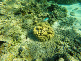1001 Mauritius island - Ile Maurice 2014 - GOPR2823_DxO Pbase.jpg