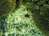 1016 Mauritius island - Ile Maurice 2014 - GOPR2841_DxO Pbase.jpg