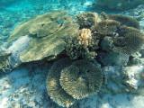 1017 Mauritius island - Ile Maurice 2014 - GOPR2843_DxO Pbase.jpg