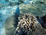 1019 Mauritius island - Ile Maurice 2014 - GOPR2845_DxO Pbase.jpg