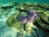 1023 Mauritius island - Ile Maurice 2014 - GOPR2849_DxO Pbase.jpg