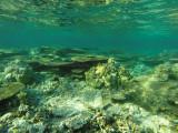 1024 Mauritius island - Ile Maurice 2014 - GOPR2852_DxO Pbase.jpg