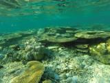 1025 Mauritius island - Ile Maurice 2014 - GOPR2853_DxO Pbase.jpg