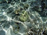 1028 Mauritius island - Ile Maurice 2014 - GOPR2857_DxO Pbase.jpg