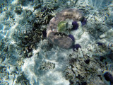 1046 Mauritius island - Ile Maurice 2014 - GOPR2875_DxO Pbase.jpg