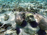 1048 Mauritius island - Ile Maurice 2014 - GOPR2877_DxO Pbase.jpg