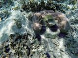 1049 Mauritius island - Ile Maurice 2014 - GOPR2878_DxO Pbase.jpg