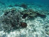 1076 Mauritius island - Ile Maurice 2014 - GOPR2905_DxO Pbase.jpg