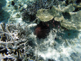 1078 Mauritius island - Ile Maurice 2014 - GOPR2907_DxO Pbase.jpg