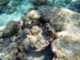975 Mauritius island - Ile Maurice 2014 - GOPR2795_DxO Pbase.jpg