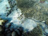 980 Mauritius island - Ile Maurice 2014 - GOPR2801_DxO Pbase.jpg