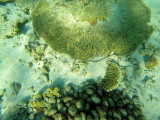 981 Mauritius island - Ile Maurice 2014 - GOPR2802_DxO Pbase.jpg