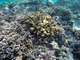 985 Mauritius island - Ile Maurice 2014 - GOPR2807_DxO Pbase.jpg