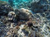 988 Mauritius island - Ile Maurice 2014 - GOPR2810_DxO Pbase.jpg