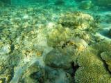 991 Mauritius island - Ile Maurice 2014 - GOPR2813_DxO Pbase.jpg