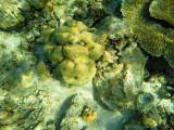 994 Mauritius island - Ile Maurice 2014 - GOPR2816_DxO Pbase.jpg