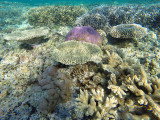 995 Mauritius island - Ile Maurice 2014 - GOPR2817_DxO Pbase.jpg