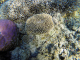 998 Mauritius island - Ile Maurice 2014 - GOPR2820_DxO Pbase.jpg