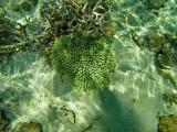 1100 Mauritius island - Ile Maurice 2014 - GOPR2932_DxO Pbase.jpg