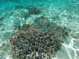 1102 Mauritius island - Ile Maurice 2014 - GOPR2935_DxO Pbase.jpg