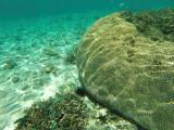 1111 Mauritius island - Ile Maurice 2014 - GOPR2944_DxO Pbase.jpg