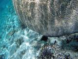 1112 Mauritius island - Ile Maurice 2014 - GOPR2945_DxO Pbase.jpg