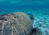 1115 Mauritius island - Ile Maurice 2014 - GOPR2948_DxO Pbase.jpg