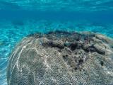 1117 Mauritius island - Ile Maurice 2014 - GOPR2950_DxO Pbase.jpg