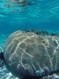 1119 Mauritius island - Ile Maurice 2014 - GOPR2952_DxO Pbase.jpg
